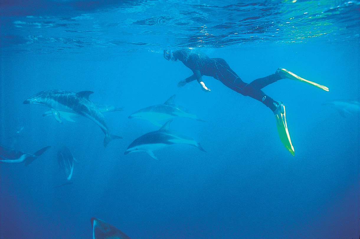 Dolphin Watching, Swim with Dolphins, Dolphin Encounter