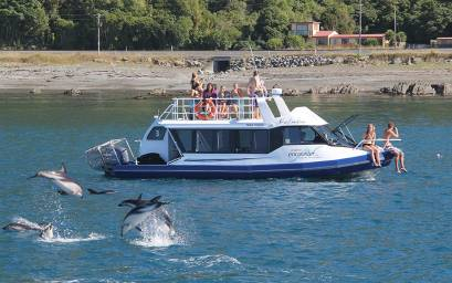 Dolphins playing with Kotuku boat nearby