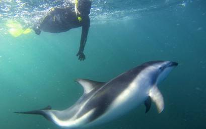 Underwater with dolphins