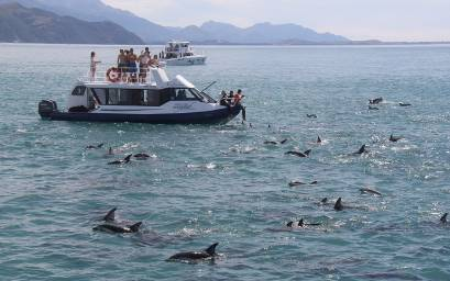 People aboard Kotuku surrounded by dolphins