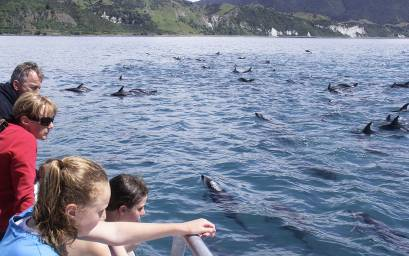 Family viewing dolphins