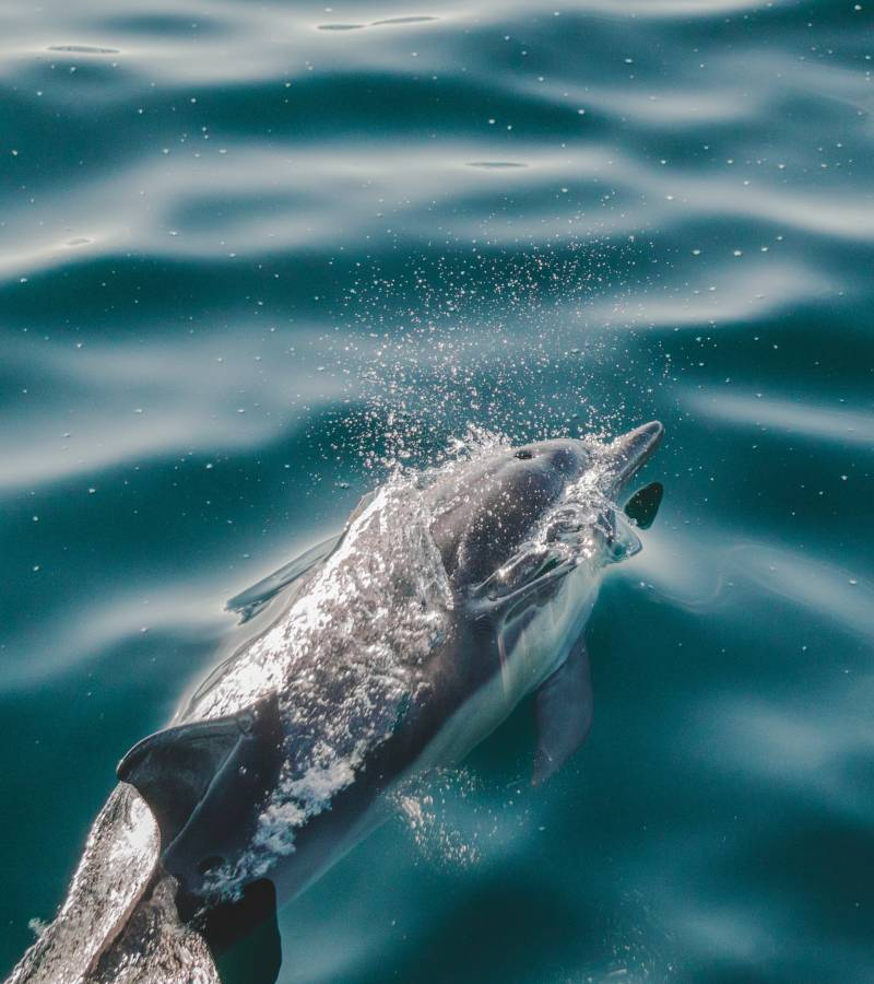 Dolphin Conservation: It's up to all of us.